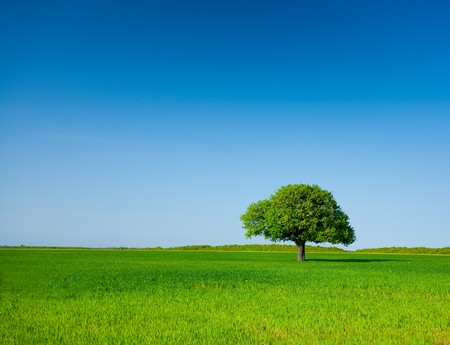 Landscape with a lonely tree in a wheat field under clear blue sky Stock Photo - 6910865