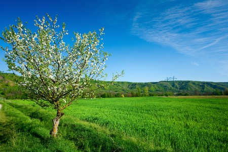 Landscape with a lone tree in a wheat field Stock Photo - 6910895
