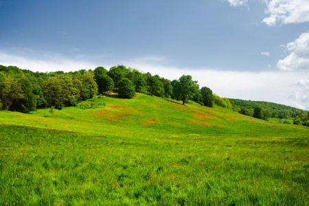 Vibrant landscape with hills and forest under blue sky Stock Photo - 7056729