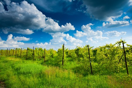 Vibrant landscape with a winery under blue sky with clouds photo