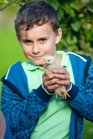 Portrait of a baby chick being held by a boy photo