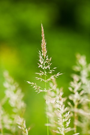 Detailed close up of grass straws on green background, shallow depth of field Stock Photo - 7168226
