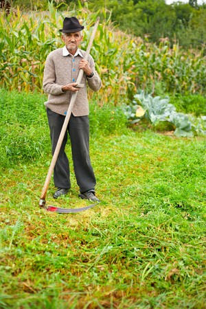 Senior farmer using scythe to mow the lawn traditionally photo