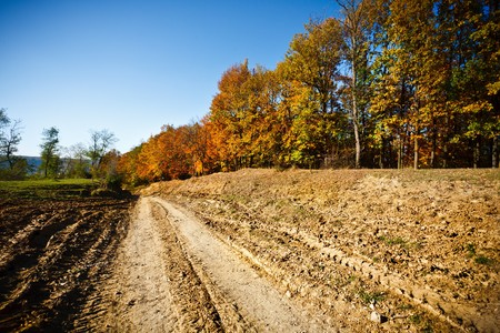 Autumnal landscape with beech trees in a sunny day Stock Photo - 8147566