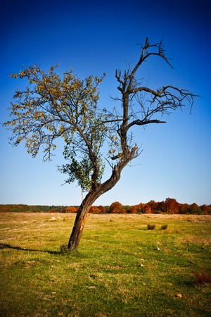 Solitary tree in a meadow, far away from the forest Stock Photo - 8147558