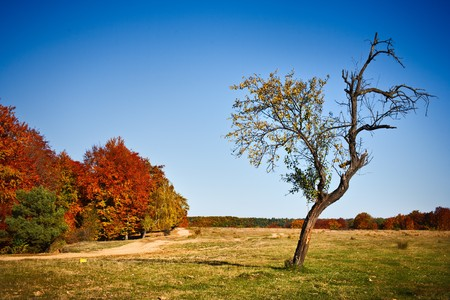 Solitary tree in a meadow, far away from the forest photo
