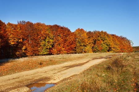 Autumnal landscape with beech trees in a sunny day Stock Photo - 8147557