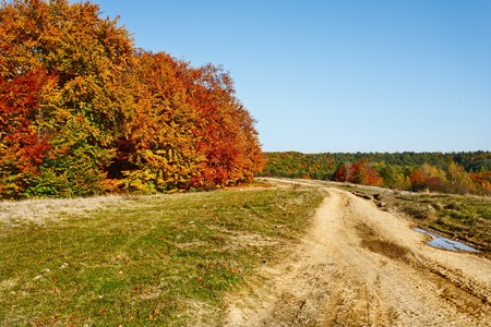 Autumnal landscape with beech trees in a sunny day Stock Photo - 8147564