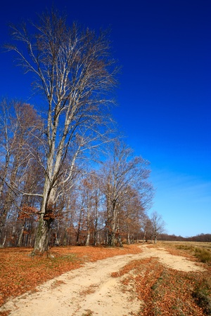 Rural road near beech forest Stock Photo - 8273386