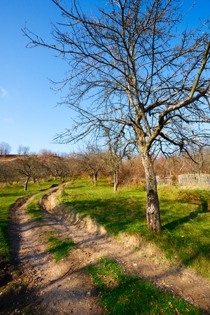 Vibrant landscape with rural dirt road and trees Stock Photo - 8225770
