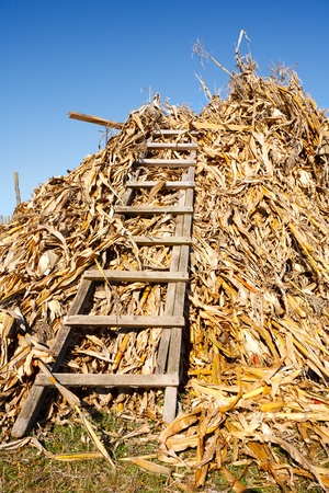 Bale of corn stems and a wooden ladder under blue sky Stock Photo - 8336214