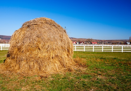 Yellow hay stack on a meadow in the countryside photo