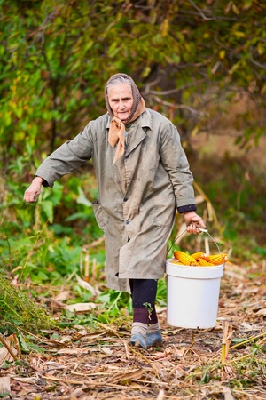 old farm: Old woman carrying a bucket full of corn Stock Photo