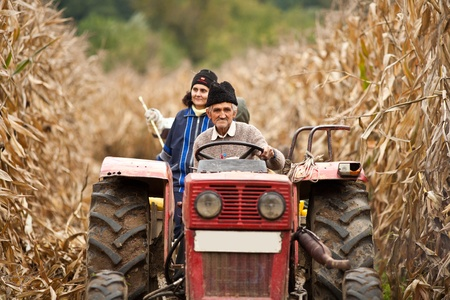 Rural family on a tractor driving through a ripe corn field for the harvest