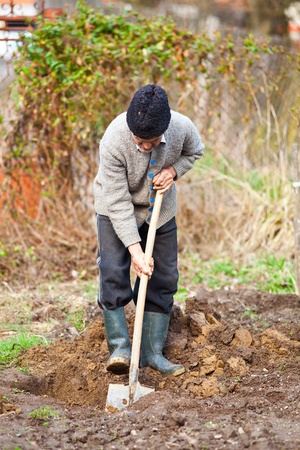 dug: Old farmer digging in the garden for planting trees