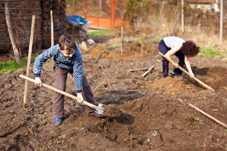dug: Mother and son digging into the garden for planting trees