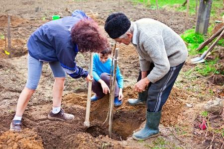 Abuelo, hija y nieto de plantación de árboles en el jardín