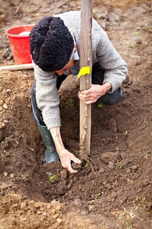 Senior farmer planting a tree in the garden Stock Photo - 9412654