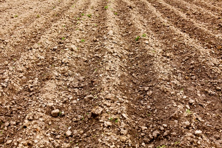 Landscape of ploughed land with rows pattern Stock Photo - 9412744