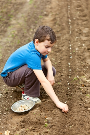 Boy planting garlic on a lawn in rows