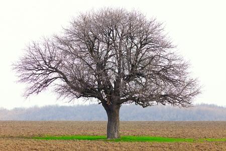 European hornbeam (carpinus betulus) in a ploughed land