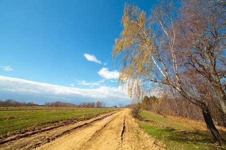 Landscape with a rural dirt road going near forest photo