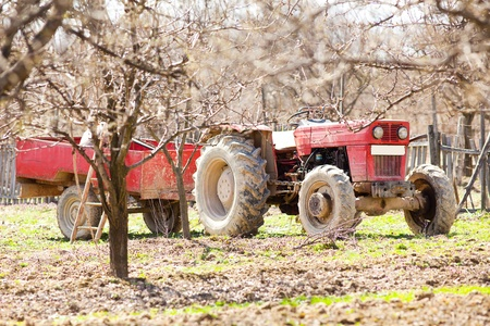 Old red tractor with trailer in an orchard photo