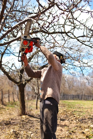 Portrait of a senior farmer trimming apple trees in an orchard photo