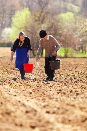 manually: Old senior couple of farmers planting seeds mixed with fertilizer, manually