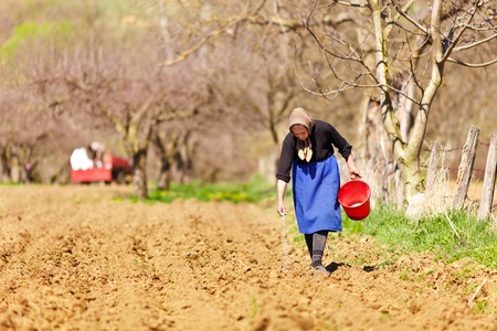 disperse: Old farmer woman sowing seeds mixed with fertilizer from a bucket Stock Photo
