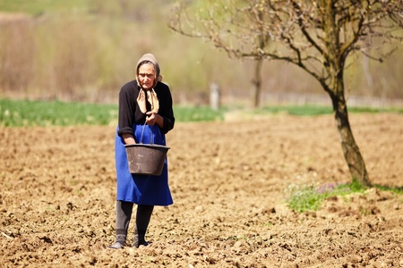 old farm: Old farmer woman sowing seeds mixed with fertilizer from a bucket Stock Photo