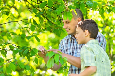 Father and son looking at the fruits of an unripe cherry tree Stock Photo - 9619368