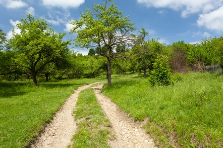 Landscape with empty road through forest under blue sky Stock Photo - 9849895
