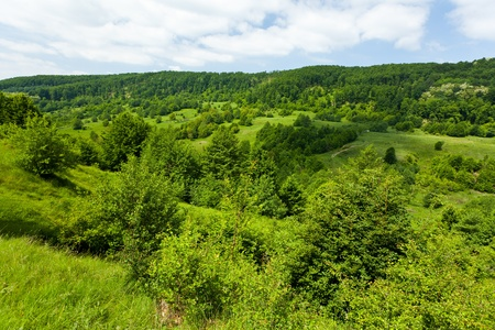 Landscape with green forest and meadow under blue sky Stock Photo - 9849892