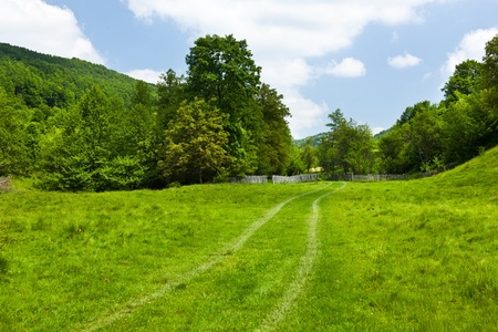 Landscape with green forest and meadow under blue sky Stock Photo - 9849744