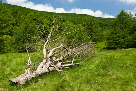 Landscape with a fallen tree on a meadow near forest Stock Photo - 9849894