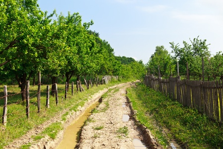 Landscape with a muddy rural road going through an orchard Stock Photo - 9849746