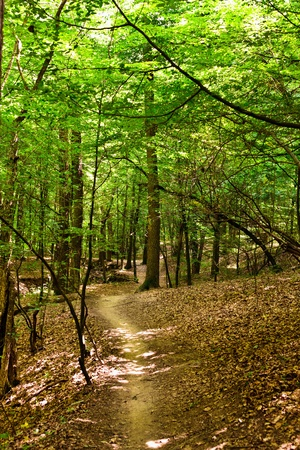 Beautiful landscape with an enchanted green oak and beech forest in a summer day photo