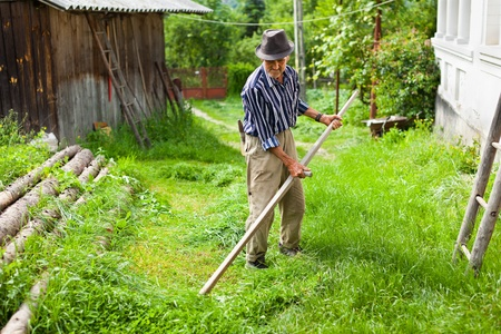 scythe: Senior farmer using scythe to mow the lawn traditionally