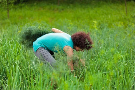 Young woman harvesting dill in a garden photo