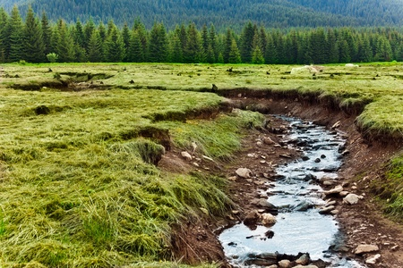 pine creek: Landscape with a small creek in Romanian Carpathians mountains with pine forests around