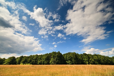 Landscape with a forest of beech trees under blue sky with clouds Stock Photo - 10232183
