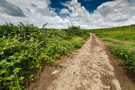 Landscape with dirt road in the countryside under blue sky with clouds Stock Photo - 10232214