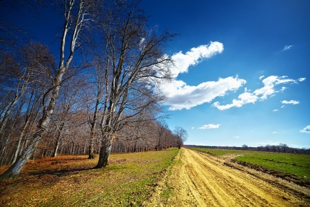Landscape with a rural road near the forest, at sunset Stock Photo - 10356042