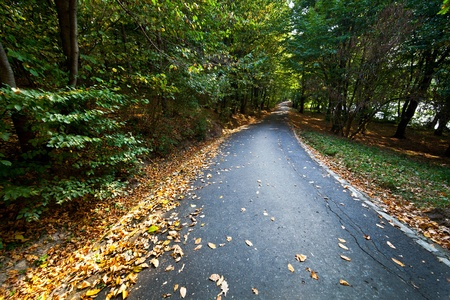 Paved alley through deciduous forest of beech and oak Stock Photo - 10842363