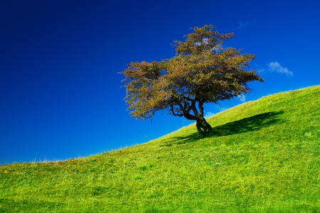 Landscape with a single tree on a meadow Stock Photo - 10842393