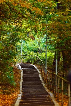 Le scale in salita in una tranquilla foresta in autunno Archivio Fotografico