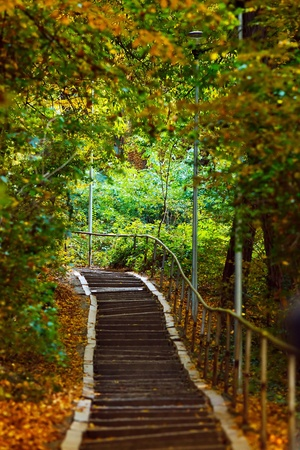 Stairs going uphill in a peaceful forest in autumn