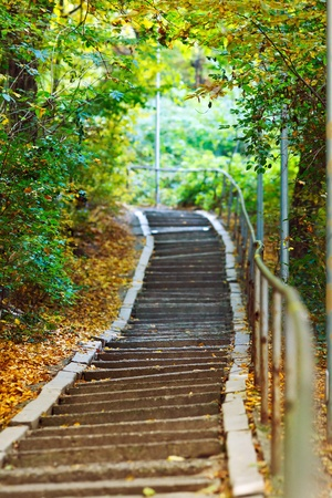 Stairs going uphill in a peaceful forest in autumn photo