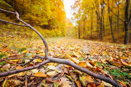 Colorful autumnal landscape with deciduous forest and many fallen leaves Stock Photo - 11151490